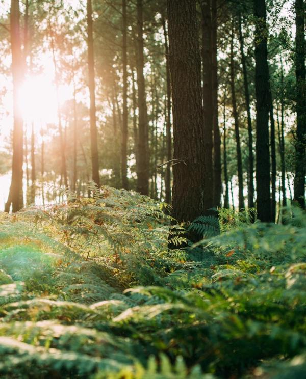 Forêt landaise © Sébastien Chebassier
