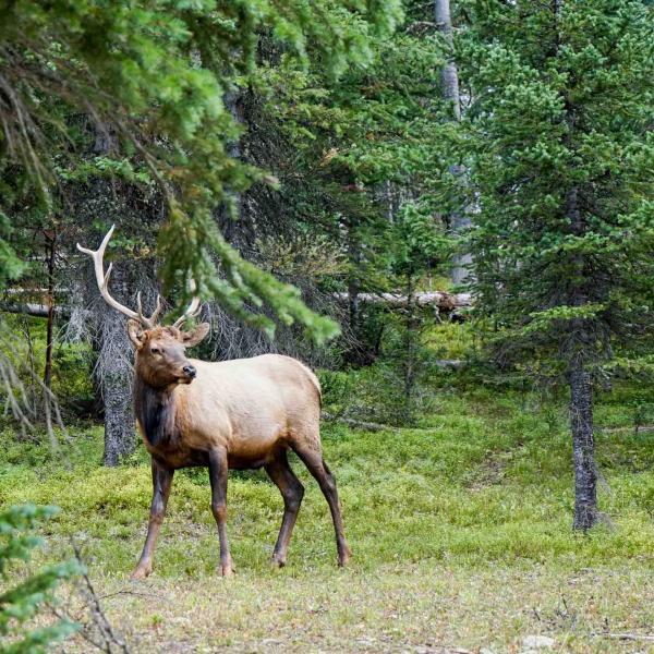 Observer les animaux sauvages fait partie intégrante de l'expérience du Rocky Mountain National Park © YONDER.fr