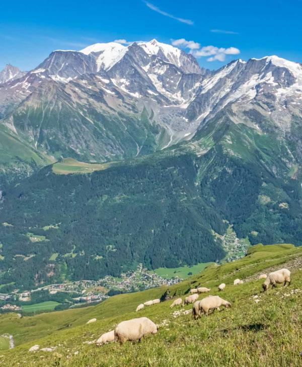 Derniers instants en montagne, dernières rencontres et voilà déjà le chemin du retour © Boris Molinier