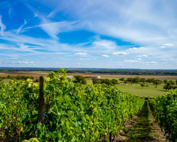 Vignes de Meuse ©Artipair