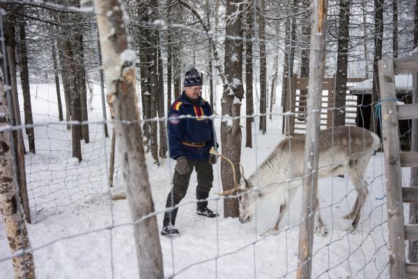 Manne joue avec ses rennes comme on le ferait avec un chien.