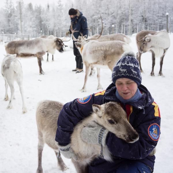 Christina Löther caline un jeune renne.