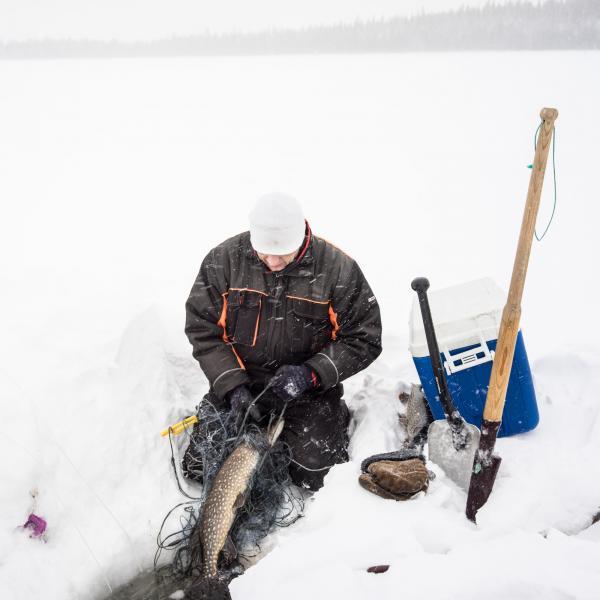 Timo est habile à récupérer les poissons dans les filets.