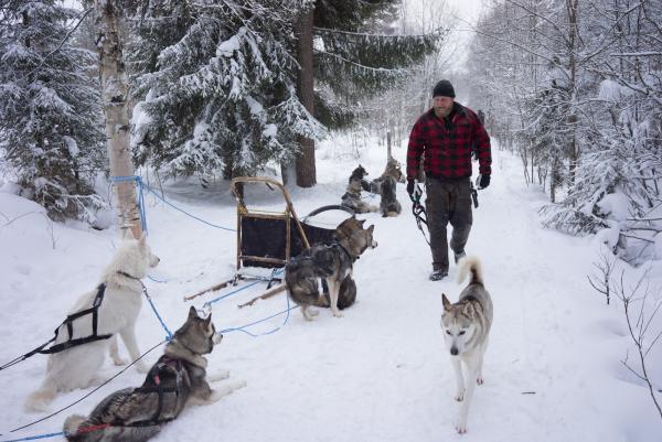 Lauri, de Kota-Husky, avec ses huskies sibériens.