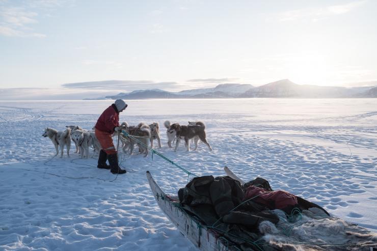 Groenland - Traîneau à chien près de Qeqertat