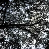 Partout dans l'Hacienda, une végétation dense © Yonder.fr