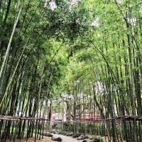 Bambous dans le Gucheng Park © Yonder.fr