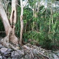 Vue depuis la cabine de douche (derrière une moustiquaire) dans une Mayan Villa © Yonder.fr