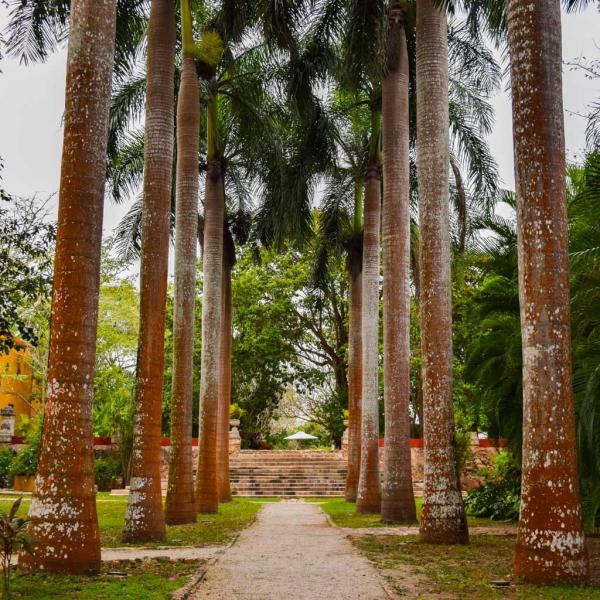 Une impressionnante allée de palmiers relie la chapelle à la zone de la piscine © Yonder.fr