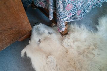 Une peau d'ours est utilisée comme tapis dans le salon.