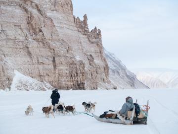 Des chasseurs passent en traineau à proximité des Inuussat.