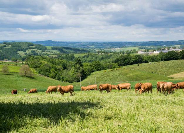 Des fromages connus et reconnus, l'Occitanie n'en manque pas. Et de Nîmes aux Pyrénées, la région en brandit trois de belle renommée: le Pélardon et le Roquefort tout deux d'Appellation d'Origine Protégée et la Tomme des Pyrénées qui veille jalousement sur son origine géographique!