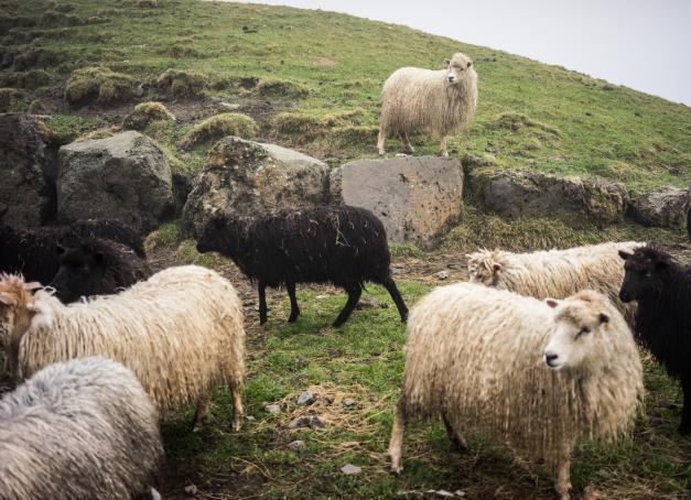 À l'occasion de l'ouverture d'une liaison directe entre Paris et les Îles Féroé, notre auteur pose son regard sur cet archipel de l'Atlantique Nord dans un reportage exceptionnel.  De ses paysages spectaculaires à ses tables avant-gardistes, de ses fermes de moutons à ses galeries d'art, découvrez les Féroé, territoire aussi hospitalier qu'égalitaire.