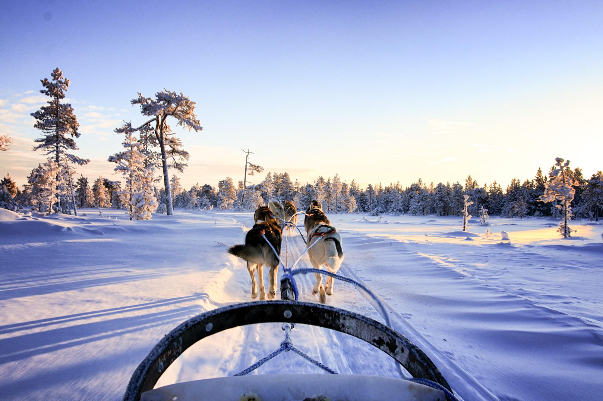 À l'occasion de la sortie le 13 mars d'« Aïlo, une Odyssée en Laponie », un film qui retrace, à mi-chemin entre conte et documentaire, la première année d'un petit renne, nous vous emmenons en Laponie finlandaise pour un voyage exceptionnel. Atmosphère hivernale féérique, balades en traîneau à chiens... et rencontre avec Aïlo lui-même !